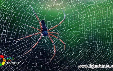 Lem Jaring Spiderman di Dunia Nyata